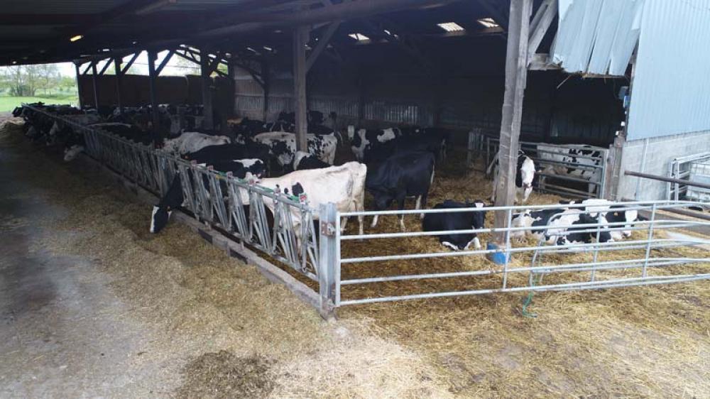 ferme laitiere douai